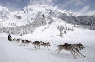 dog-sledding1